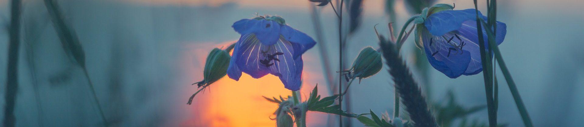 secret wild flower