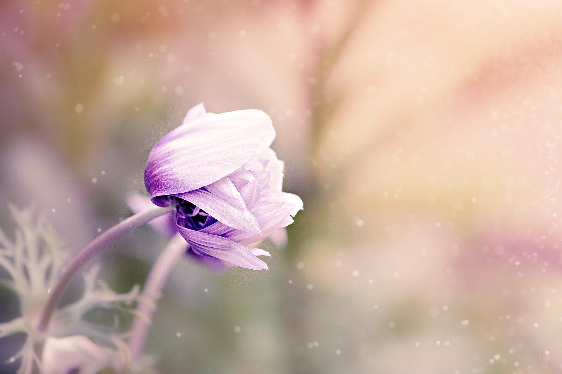 secret-wild-flower